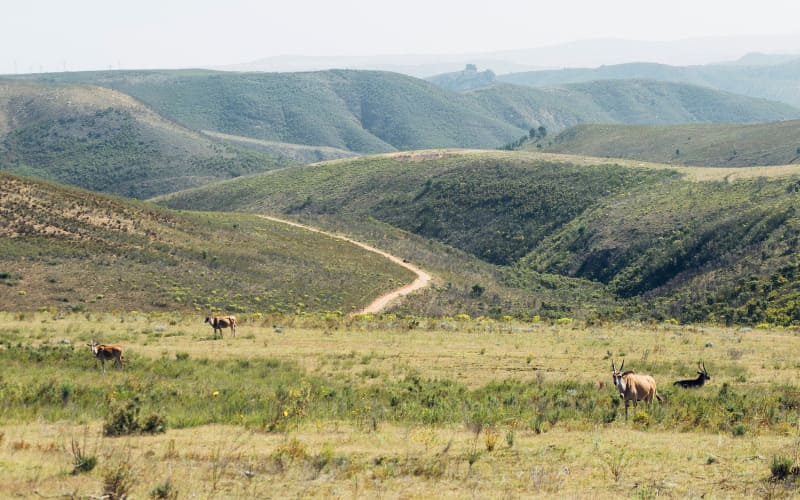 Check Out Some Of South Africa's Best Safaris